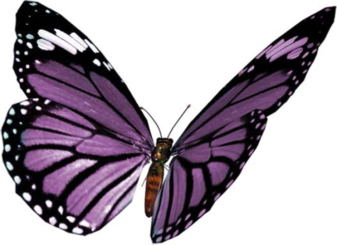 Offanengo mostra 39 andar per farfalle 39 il nuovo torrazzo for Immagini farfalle per desktop